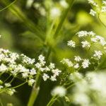19.06, 18.07, 21.08 – Uczymy się rozpoznawać zioła
